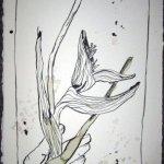 Ranunkeln - Zeichnung von Susanne Haun - 60 x 25 cm - Tusche auf Kuperdruckkarton