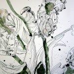 Rote Papageientulpen - Zeichnung von Susanne Haun - 42 x 55 cm - Tusche auf Bütten
