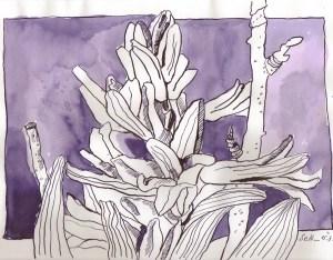 Hyazinthen - Zeichnung von Susanne Haunc-20 x 30 cm - Tusche auf Bamboo Papier