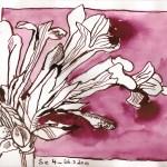 Rosa Blüte - Zeichnung von Susanne Haun - 15 x 21 cm - Tusche auf Magnani Disegno Bütten