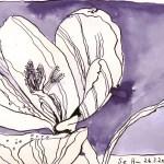 Weiße Blüte - Zeichnung Susanne Haun - 15 x 21 cm - Tusche auf Magnani Velata Bütten