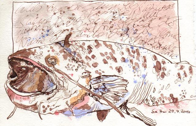Wels - Zeichnung von Susanne Haun - 15 x 20 cm - Tusche auf Silberburg Bütten
