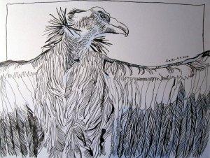Schneegeier - Zeichnung von Susanne Haun - 24 x 32 cm - Tusche auf Bütten