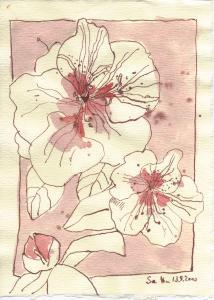 Rhododendron - Zeichnung von Susanne Haun - 20 x 15 cm - Tusche auf Bütten