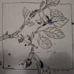 Zweig vom Pflaumenbaum - Zeichnung von Susanne Haun - 25 x 25 cm - Tusche auf Bütten