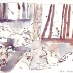 Es leben nur wenige Wolfsfamilien dort - Zeichnung von Susanne Haun - 20 x 30 cm - Hahnemühle Skizzenpapier