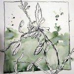 Olivenbaumzweig - Zeichnung von Susanne Haun - 25 x 25 cm - Tusche auf Bütten