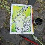 Die Zeichnung des Unkrauts - Foto von Susanne Haun