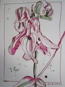 Akelei - Zeichnugn von Susanne Haun - 30 x 20 cm - Tusche auf Bütten