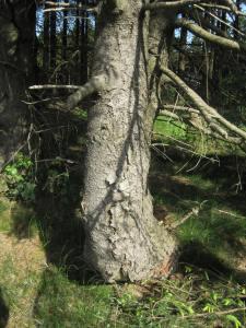 Baum im Sauerland - Foto von Susanne Haun