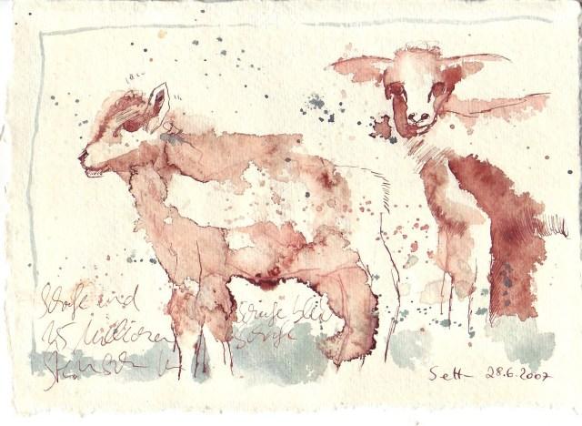 Schafskälte - Zeichnung von Susanne Haun - 15 x 20 cm - Tusche auf Silberburg Bütten