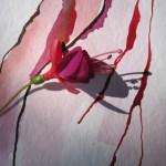Ausschnitt Fuchsie mit Schattenspiele 2 - Zeichnung von Susanne Haun