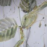 Lindenblüten - Zeichnung von Susanne Haun - 30 x 20 cm - Aquarell auf Bütten