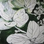 Hortensie - Zeichnung von Susanne Haun - 36 x 48 cm - Tusche auf Bütten
