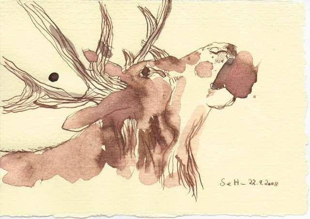 Hirsch - Zeichnung von Susanne Haun - 15 x 20 cm - Tusche auf Bütten