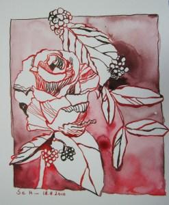 Rosen - Zeichnung von Susanne Haun - 20 x 15 cm - Tusche auf Bütten