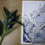 Enzian - Zeichnung von Susanne Haun - 17 x 22 cm - Tusche auf Bütten