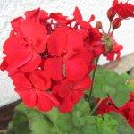 Ich mag die Roten am liebsten - Foto von Susanne Haun