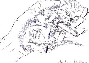 Katzenbaby - Zeichnung von Susanne Haun - 17 x 22 cm - Tusche auf Bütten