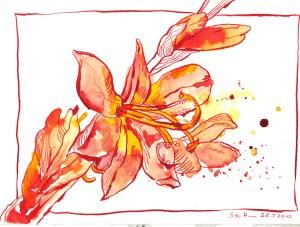 Liliengewächs rot - Zeichnung von Susanne Haun - 17 x 22 cm - Tusche auf Bütten