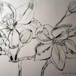 Jasmin - Zeichnung von Susanne Haun - 30 x 40 cm - Tusche auf Bütten