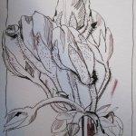 Entstehung Geranie Zeichnung von Susanne Haun