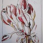 Geranie - Zeichnung von Susanne Haun - 33 x 22 cm - Tusche und Aquarell auf Hahnemühle Bütten
