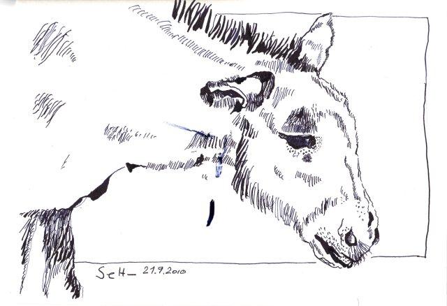 Esel - Zeichnung von Susanne Haun - 18 x 22 cm - Tusche auf Hahnemühle Selektion