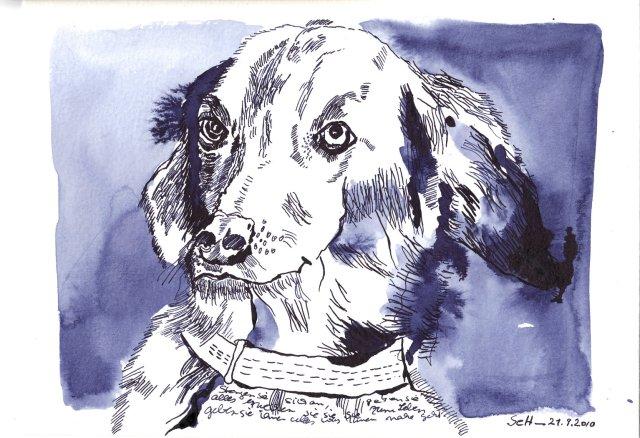 Hund - Zeichnung von Susanne Haun - 18 x 22 cm - Tusche auf Hahnemühle Selektion