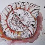 Ammonit - Zeichnung von Susanne Haun - 20 x 30 cm - Tusche und Aquarellstifte auf Bütten