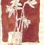 Mein Interesse für Blumen an sich begann 2008 mit diesen Osterglocken