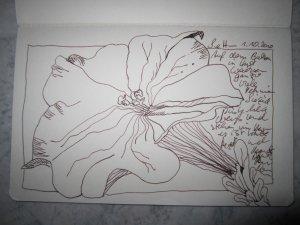 Petunie - Zeichnung von Susanne Haun - A5 Skizzenheft