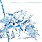 Passionsblume 1 - Zeichnung von Susanne Haun - Tusche auf Bütten - 17 x 22 cm