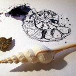 Ich suche mir immer mehr Muscheln aus meiner Schüssel, Entstehung Zeichnung Muscheln von Susanne Haun