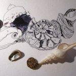 Noch mehr Muscheln - Entstehung Zeichnung von Susanne Haun