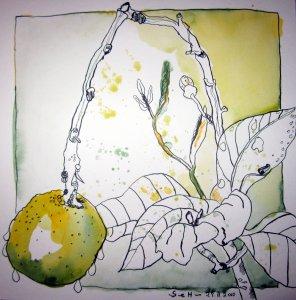 Zitrone - Zeichnung von Susanne Haun - 25 x 25 cm - Tusche auf Bütten