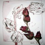 Entstehung vertrockneter Hibiskus Zeichnung von Susanne Haun