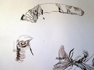 """Aufbau der Ziege anhand des Auge - Ausschnitt Zeichnung """"Athena"""" von Susanne Haun"""