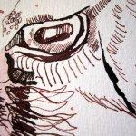 """Fertigstellung des Auge der Ziege - Ausschnitt Zeichnung """"Athena"""" von Susanne Haun"""