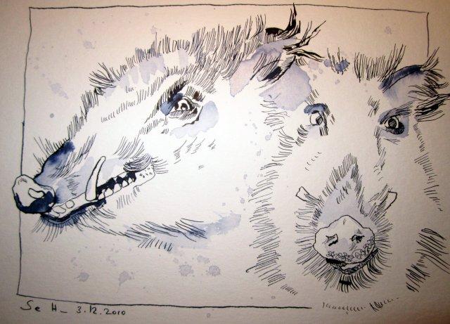 Wildschwein nach links und gerade aus schauend - Zeichnung von Susanne Haun - 24 x 32 cm - Tusche auf Bütten
