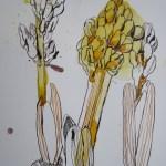Aber so werden die Linien in den Blättern goldgelb - Susanne Haun
