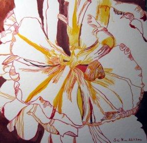 Aufgeblühte Tulpe - Zeichnung von Susanne Haun - 25 x 25 cm - Tusche auf Bütten