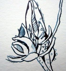 Einzelne geschlossene Blüte - Ausschnitt Zeichnung von Susanne Haun