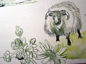 Schaf mit Blumen - Ausschnitt Ebene - Zeichnung von Susanne Haun