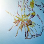 Die Tulpe ist schon am Verblühen - Susanne Haun