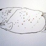 Ich amüsiere mich über den Körper des Flusskrebses - er sieht aus wie eine Kartoffel