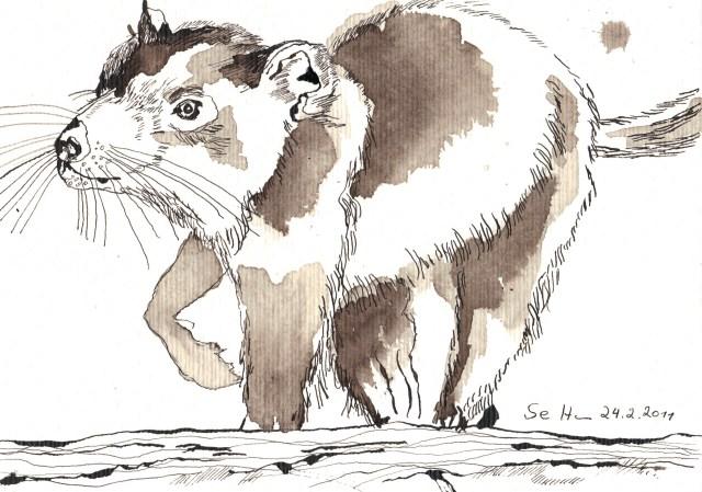 Laufender tasmanischer Teufer - Zeichnung von Susanne Haun - 17 x 22 cm - Tusche auf Bütten