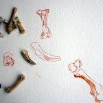 Was uns die Knochen wohl sagen? - Susanne Haun