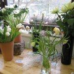 Eine weiße Blüte wähle ich heute nicht - Foto von Susanne Haun