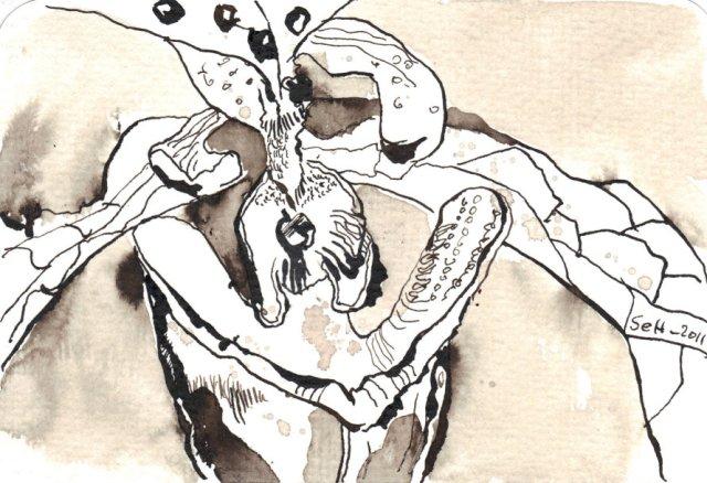 Frauenschuh - Zeichnung von Susanne Haun - 10 x 15 cm - Tusche auf Bütten